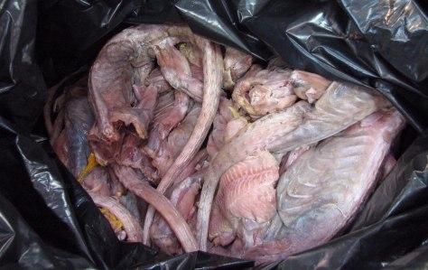Image: Iguana meat
