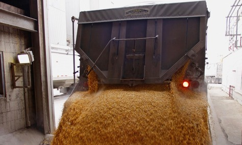 Image: Truck dumps corn grain