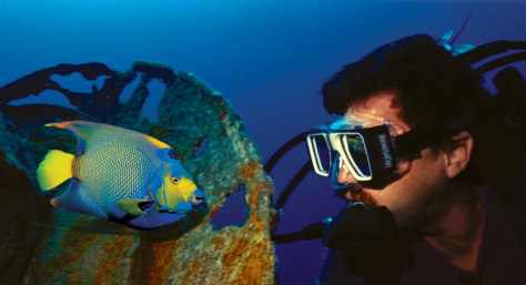Image: Queen angel fish