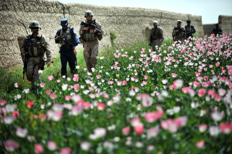 Image: Marines patrol poppy field