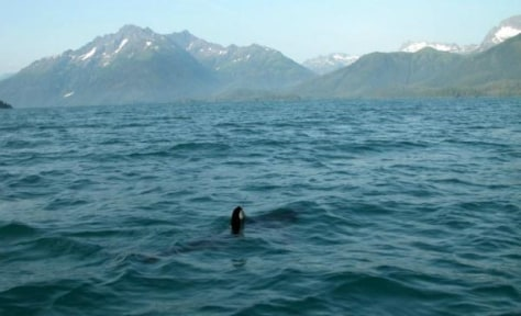 gulf of alaska 2 oceans meet science projects