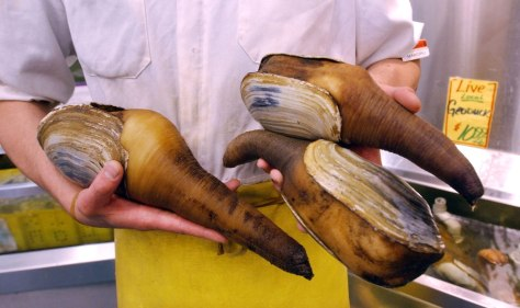 Geoducks: Monster bivalves worth big bucks - Business - US business