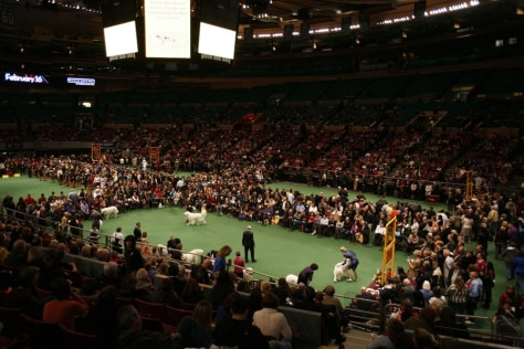 Image: Westminster Dog Show