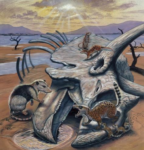 Image: Triceratops and mammals