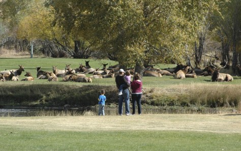 Image: Elk