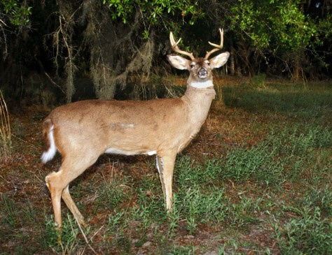 Image: Robot deer