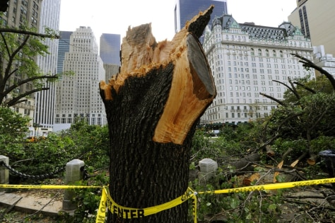 Image: Damaged Central Park trees