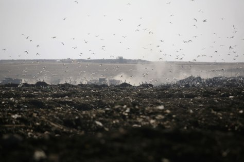 Image: Birds fly over the Bordo Poniente landfill on the outskirts of Mexico City