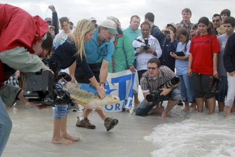 Image: Sea turtle released on beach