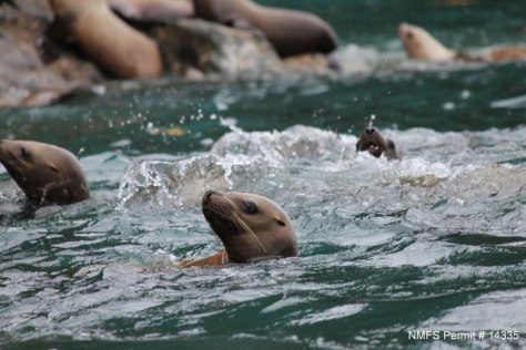 photo of sea lions in water