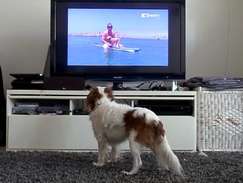 Image: DogTV