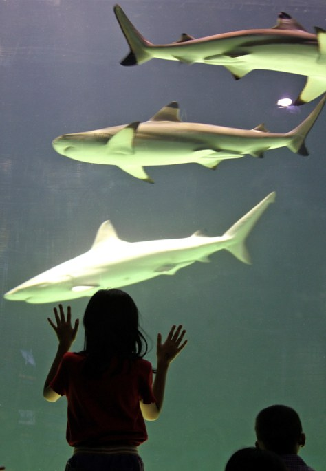 An Indonesian girl looks at sharks in Jakarta.
