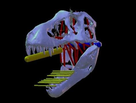 Image: T. rex computer model