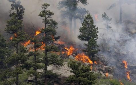 Image: Hewlett Wildfire