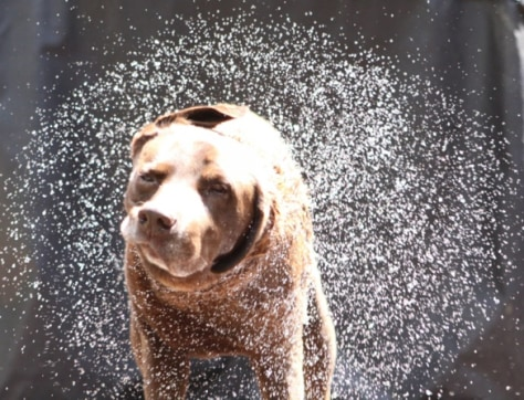 Image: Dog shaking off water