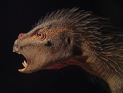 Image: Heterodontosaur