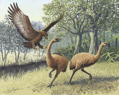 Image: Artist's rendition of eagle attacking New Zealand moa