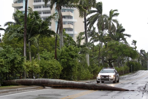 Image: A Fort Lauderdale Police car stops at a fallen palm tree trunk blocking the road.