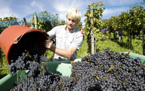 Image: Pinot Noir grapes