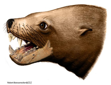 Image: Artist's rendition of an extinct walrus