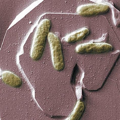Image: Bacterium