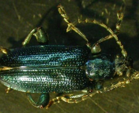 Image: Beetle
