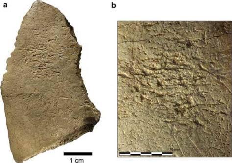 Image: Bone tools