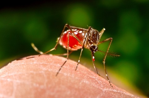 Image: Dengue