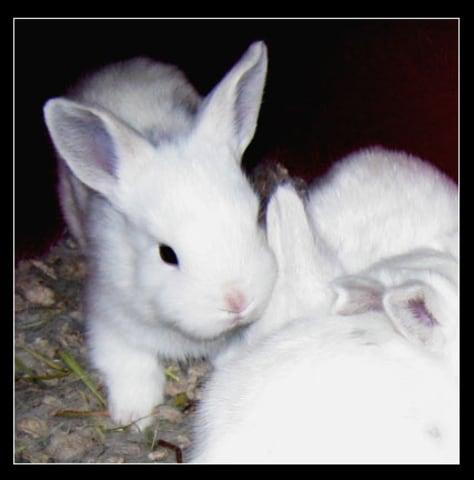 Image: Bunny