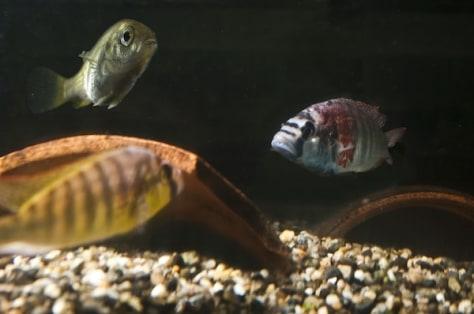 Image: Fish