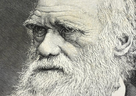 Image:Charles Darwin