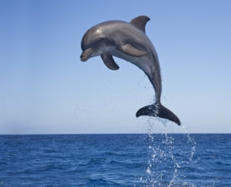 Image: Dolphin