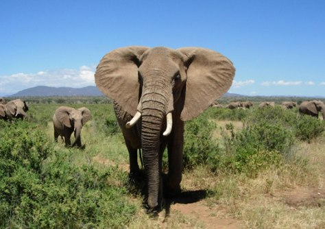 Image: Elephants