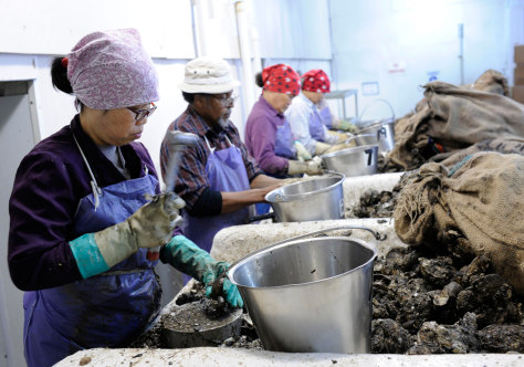 Image: Workers shuck oysters