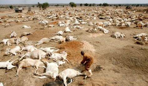 Image: Drought-stricken cattle in Kenya