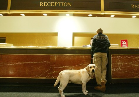 Image: Dog in lobby
