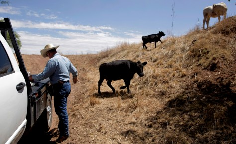 Image: Ranch owner Myron Calley after feeding his cattle near Snyder, Texas on Aug. 12