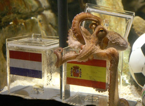 Image: Paul the octopus