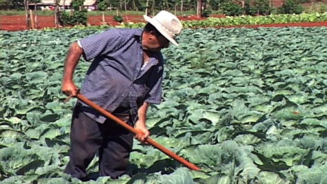 "Image: The farmer ""Orlando"" has worked around Cuba's communist system for decades and has been successful in private enterprise."