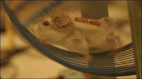 Image: Hamster on wheel