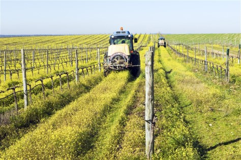 Image: Farmers with tractors spraying the vineyard with pesticides