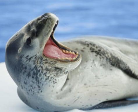 Image: Seal