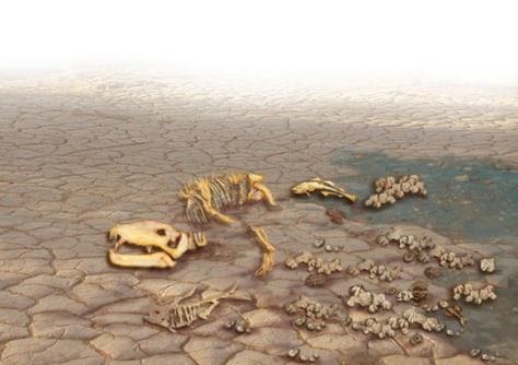 Image: Dinosaur bones