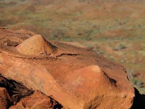 Image: Stromatolites