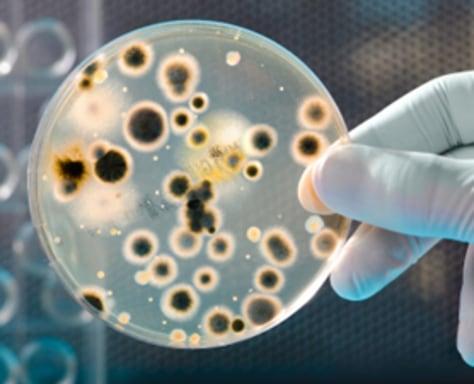 Site: Bacteria