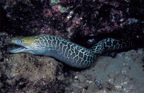 Image: Eel