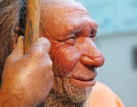 Image:Neanderthal skeleton