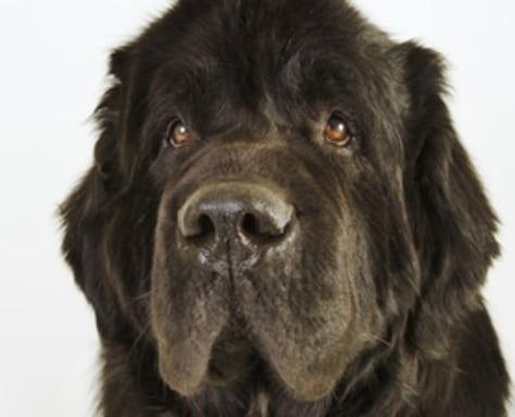 Image: Dog