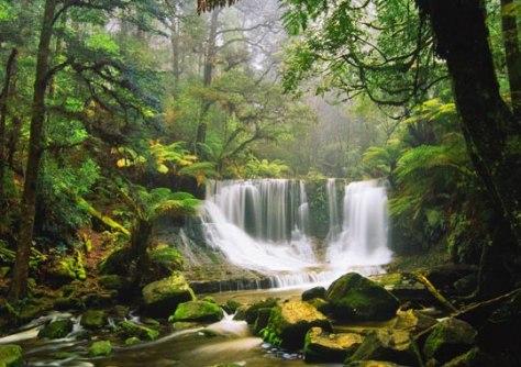 Image: Rain forest