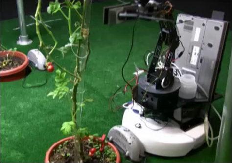Image: Robotic gardener tends tomato plants